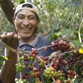 Kaffeebohnen aus fairem Handel