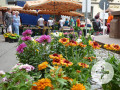 Wochenmarkt - frische Blumen