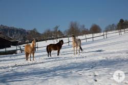Pferdekoppel in Münklingen