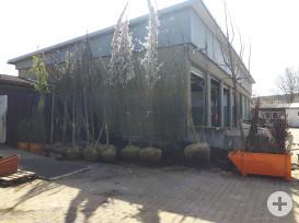Insgesamt wurden 24 Bäume, verteilt auf alle Ortsteile, gepflanzt